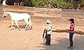 Horse-sense-and-healing-katie-1