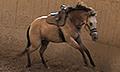 Mrilc_saddle