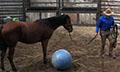 Mustangs_balls_4