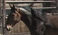 Wildhorses_2