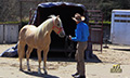 Equinevision_1