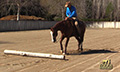 Equinevision_4