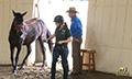Equine-chiropractic_boardman_1