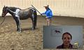 Equine-chiropractic_boardman_2