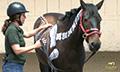 Equine-chiropractic_boardman_3