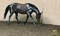 Equine-chiropractic_boardman_4