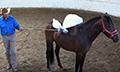 Mustang_gentling_diego_10