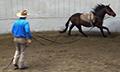 Mustang_gentling_diego_13