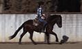 Mustang_gentling_diego_19