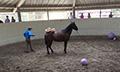 Mustangs_balls_10