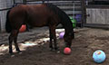 Mustangs_balls_5