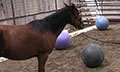 Mustangs_balls_7