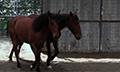 Wildhorses_8